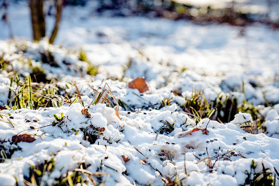 Winter in Düsseldorf Stefanie Anderson